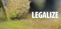 legalize_closeup_pflanzen