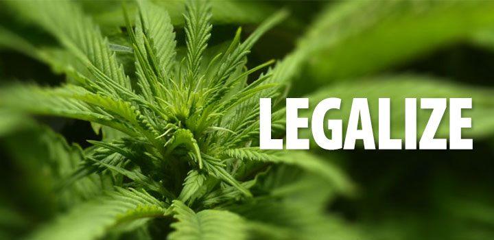 legalize_pflanze_blur