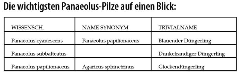 Panaeolus-Psilocybe-Pilze-Zauberpilze-Tabelle-Übersicht