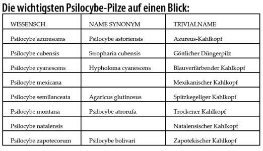 Psilocybe-Pilze-Zauberpilze-Tabelle-Übersicht