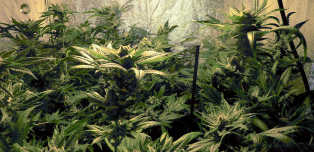 growing-indoorr-pflanzen-grün-box-blätter