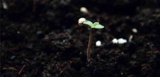 Mikroben im Boden ernähren die Pflanzen
