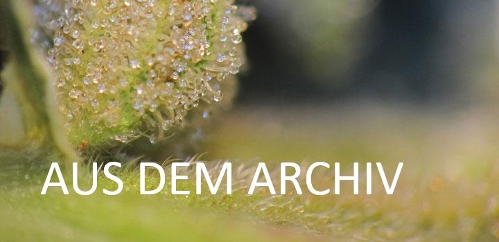 closeup-Pflanze-Hanf-Klon-Steckling-Archiv
