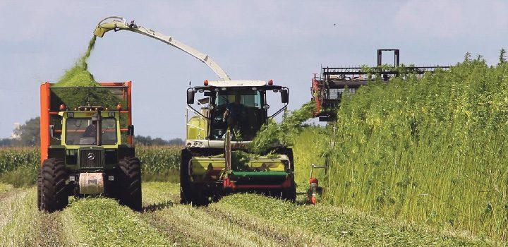 gras-wirtschaftsfaktor-trecker-traktor-feld-landwirtschaft-faserhanf-fasern-industrie-hempflax