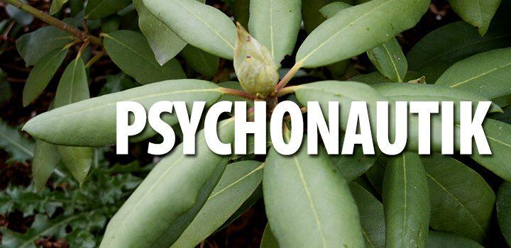 psychonautik-rhododendron-pflanze-grün-knospe-blätter-psychoktiv_text