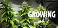 growing-buddy-header-pflanzen-ventilator-indoor-hanf-cannabis-grün