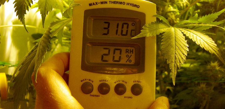 thermometer-temperatur-falsch-growing-fehler-warm-trocken-doof