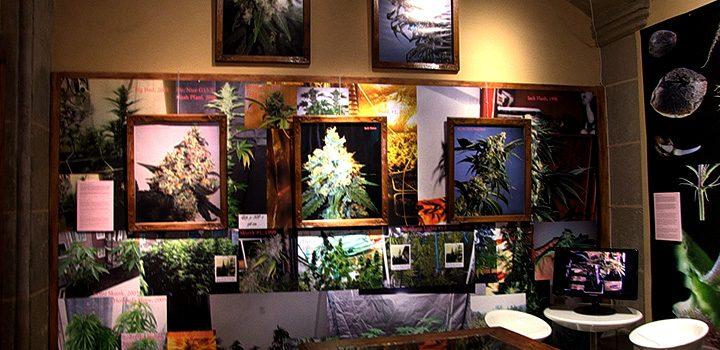 30-jahre-sensi-seeds-austellung-barcelona-wand-display-bilder
