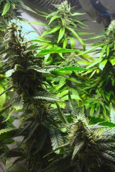 buddy2-pflanzen-indoor-grün-schrank