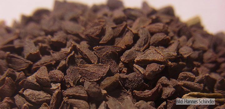 Steppenraute-Peganum-harmala-pflanzenportrait-Samen