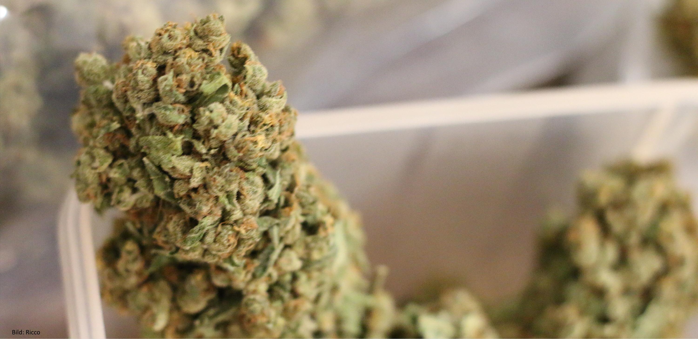 cannabis deal im gro en stil hanfjournal. Black Bedroom Furniture Sets. Home Design Ideas