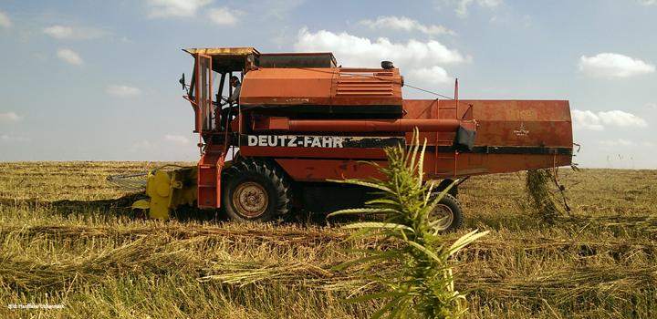 hanffaser-uckermark-hanfanbau-outdor-maschine-bauern-hanfbauern