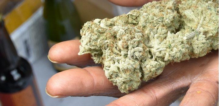 Hand-voll-Hanf-geben-darreichen-Cannabis-Weed-Bud