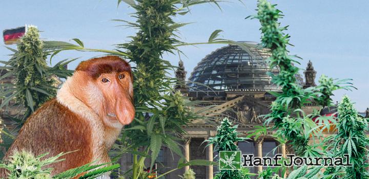 cannabis-medizinal-hanf-affe-nasenaffe-reichstag-berlin-politik-buds
