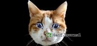 Cannabis-Katze