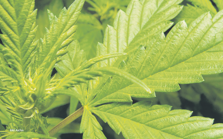 Cannabis Legalisierung 2021